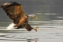 Islay-Wildlife-5